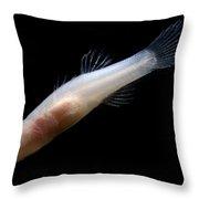Ozark Cave Fish Throw Pillow