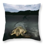 Pacific Ridley Turtle Lepidochelys Throw Pillow