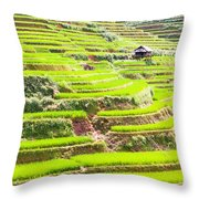 Paddy Rice Fields Throw Pillow