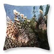 Pair Of Lionfish, Indonesia Throw Pillow