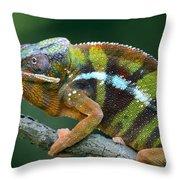 Panther Chameleon Chamaeleo Pardalis Throw Pillow