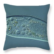 Paramecium Caudatum Lm Throw Pillow