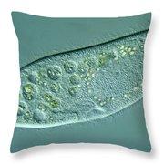 Paramecium Caudatum Throw Pillow