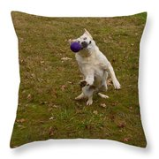 Pasha Throw Pillow