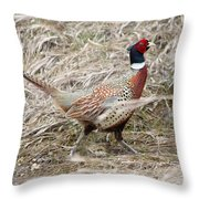 Pheasant Walking Throw Pillow