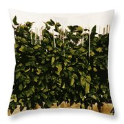 Photoperiodicity In Soybean Plants Throw Pillow by Science Source