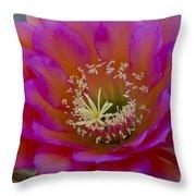 Pink And Orange Cactus Flower Throw Pillow