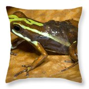 Poison Frog With Eggs Throw Pillow