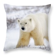 Polar Bear, Churchill, Manitoba Throw Pillow