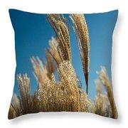Pompas Grass 1 Throw Pillow