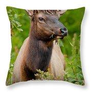 Portrait Of A Bull Elk Throw Pillow