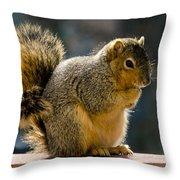Praying Squirrel  Throw Pillow