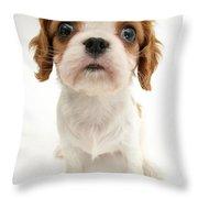 Puppy Throw Pillow by Jane Burton