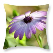Purple Daisy  Throw Pillow