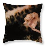 Pygmy Seahorse, Indonesia Throw Pillow