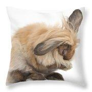 Rabbit Grooming Throw Pillow