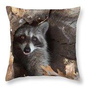Raccoon Procyon Lotor Throw Pillow