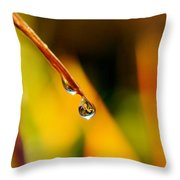 Raindrop On Strelitzia Reginae Throw Pillow