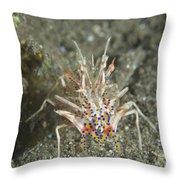 Rare Tiger Shrimp On Volcanic Sand Throw Pillow