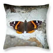 Red Admiral Butterfly - Vanessa Atalanta Throw Pillow