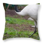 Red Crowned Crane Throw Pillow