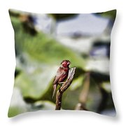 Red Faced Throw Pillow