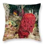 Red Sponge Throw Pillow