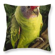 Red-tailed Amazon Amazona Brasiliensis Throw Pillow