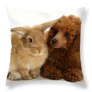 Red Toy Poodle And Rabbit Throw Pillow