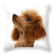 Red Toy Poodle Throw Pillow