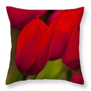 Red Tulips In Holland Throw Pillow
