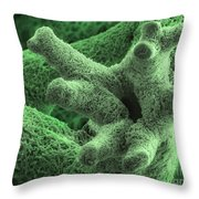 Reindeer Lichen, Sem Throw Pillow by Ted Kinsman