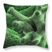 Reindeer Lichen, Sem Throw Pillow