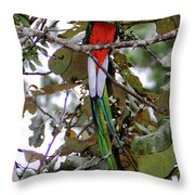 Resplendent Quetzal Throw Pillow