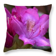 Rhododendron Bloom Throw Pillow
