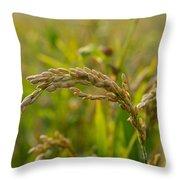 Rice Throw Pillow