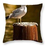 Ring-billed Gull On Pillar Throw Pillow