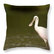 Roseate Spoonbill Ajaia Ajaja Throw Pillow