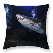 Sand Tiger Shark, Blue Zoo Aquarium Throw Pillow