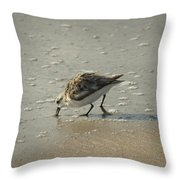 Sandpiper Hunting On Assateague Island Maryland Throw Pillow