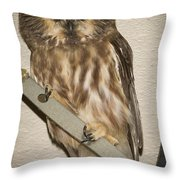Saw-whet Throw Pillow