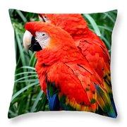 Scalet Macaw Throw Pillow