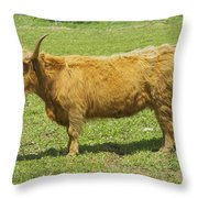 Scottish Highland Cow In Farm Field Maine Throw Pillow