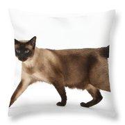 Seal Point Siamese Cat Throw Pillow