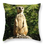 Sentinel Meerkat Throw Pillow