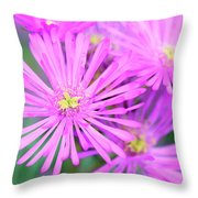 Showy Vygie Throw Pillow