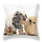Silver Double Dapple Dachshund Pup Throw Pillow