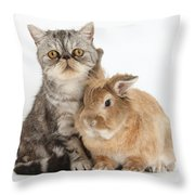 Silver Tabby Cat And Lionhead-cross Throw Pillow