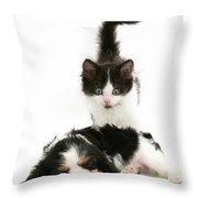 Sleeping Puppy Throw Pillow by Jane Burton