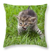 Small Kitten In The Grass Throw Pillow